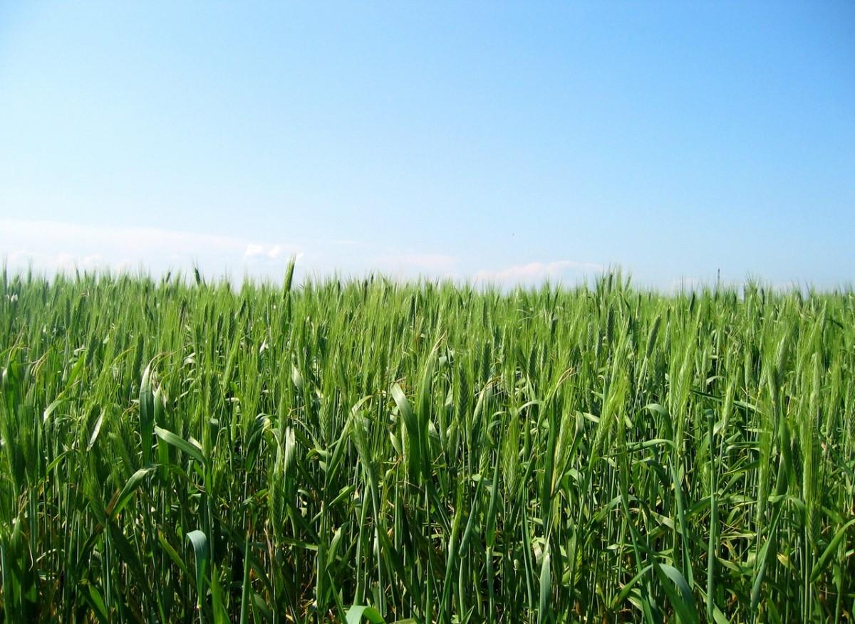 Odporność roślin